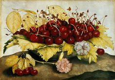 Giovanna Garzoni (1600–1670) - Still life with Carnations and Cherries.