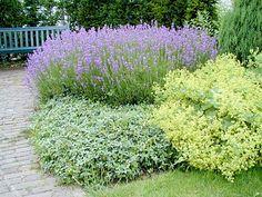 drought tolerant ornamental grass great outdoors pinterest drought tolerant grasses and. Black Bedroom Furniture Sets. Home Design Ideas