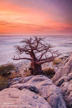 """ Baobab Landscape""on Kubu Island in Botswana by Isak Pretorius Wildlife Photography Botswana Travel Destinations Honeymoon Backpack Backpacking Vacation Budget Bucket List Wanderlust Photography Okavango Delta, Wildlife Photography, Travel Photography, Safari, Chobe National Park, Baobab Tree, Scenery Pictures, Out Of Africa, Africa Travel"