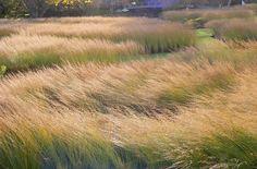 Billedresultat for piet oudolf Meadow Garden, Dry Garden, Love Garden, Landscape Architecture, Landscape Design, Architecture Design, Garden Design, Parks, Dutch Gardens