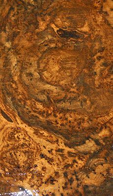 English Oak A5721-A5736: This log was harvested from the Duke of North Umberland's Estate. The tree is over 300 years old and measures about 7 feet wide at the widest point. The tree was dying from a fungus only found in England that actually kills the tree and in the process changes the wood's color into a beautiful chocolate brown. This tree was also covered in burls. The outside boards show the thickest burl pattern giving it a marble like appearance! ~ Hearne Hardwoods Inc.