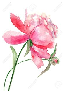 Beautiful Peony Flower, Watercolor Painting Stock Photo, Picture ...