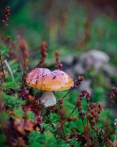 Wild Mushroom - Alaska Mount Alyeska - Fall Colors - Forest - Nature - Bright Yellow Violet Pink - Macro Photo - Shroom - Pacific North Face