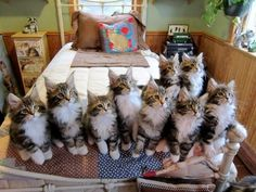 Clowder is the appropriate term for a group of cats. (I want one of these!)