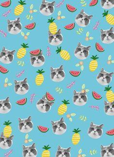 cats & fruits
