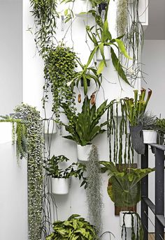 Wonderful Tricks: Artificial Plants Balcony Outdoor artificial garden tips.Large Artificial Plants Palm Trees artificial flowers for hair. Hanging Plants, Potted Plants, Garden Plants, Indoor Plants, Plants In Pots, Shade Plants, Air Plants, Indoor Outdoor, Garden Deco