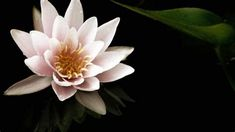 Beautiful Flower Background HD Wallpaper - WallpaperFX