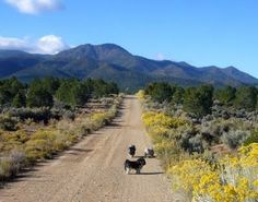 a walk along a country road in Taos