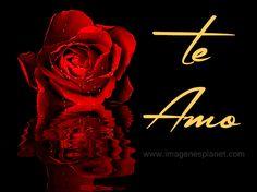 23 Imágenes de rosas rojas con frases de amor romanticas