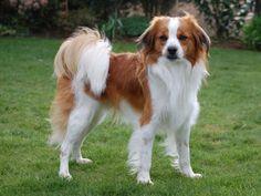 afbeeldingen honden - Google zoeken