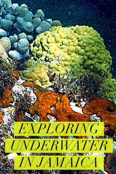 Beautiful Jamaica known for it's white sand beaches holds another beauty under the sea. Explore images of underwater snorkeling in Jamaica.