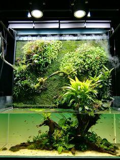 10 Tips on Designing a Freshwater Nature Aquarium Planted Aquarium, Aquarium Terrarium, Nature Aquarium, Tropical Aquarium, Aquarium Fish Tank, Tropical Fish, Aquarium Aquascape, Fish Tanks, Vivarium