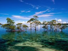 Best places to visit in Andaman and Nicobar islands in February