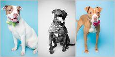 STUDIO PET PHOTOGRAPHY TIPS
