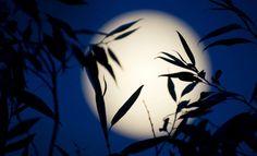 El sustantivo «superluna» se escribe en minúscula, con el prefijo «super-» unido a «luna», sin guion ni espacio intermedios y sin necesidad de comillas o cursiva. http://www.fundeu.es/recomendacion/superluna-grafia-adecuada/ Foto: ©Archivo Efe/Daniel Naupold