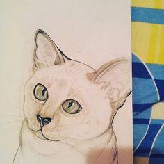 #meow #catlover #scketchbook