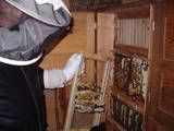Inside AtlanticMaster's Bee House & Hives
