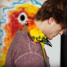I mean the bird... wait... is that a real bird?