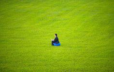 Artificial Grass, Landscape Artificial Lawn, Sports Artificial Turf, Leisure Artificial Lawn, Artificial Car Mats