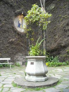 Santiago serrano Bird, Outdoor Decor, Plants, Home Decor, Buenos Aires, Santiago, Decoration Home, Room Decor, Birds