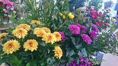 お盆のお花たち