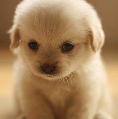 soooo cute <3
