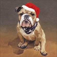pack of 8 charity christmas cards illustrated with a gorgeous painting of a grumpy bulldog entitled christmas cheer by alex macdonald - Animal Charity Christmas Cards