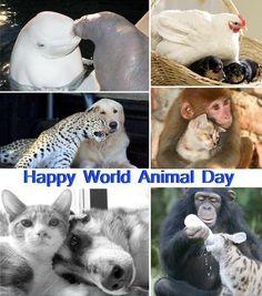 Happy World Animal Day!