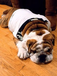 I just need a little rest..#Bully