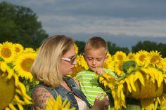Sunflower field shoot