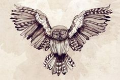 My favourite animal- the Barred Owl