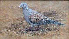 alan m hunt Bird Paintings, Photorealism, Wildlife Art, Bird Prints, Bird Art, Natural World, Birds, Canvas, Nature