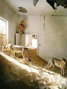 Safari | ♕LadyLuxury♕