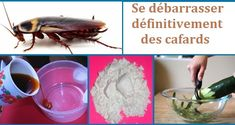 Cafards: Voici donc quelques produits naturels faits maison pour éloigner éliminer définitivement ces nuisibles créatures et quelques méthodes efficaces