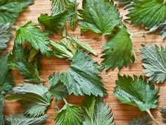 Nettles are best as young shoots before they flower. Wear gloves when harvesting!