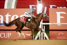 """""""He is a once in a lifetime horse"""" #CaliforniaChrome"""