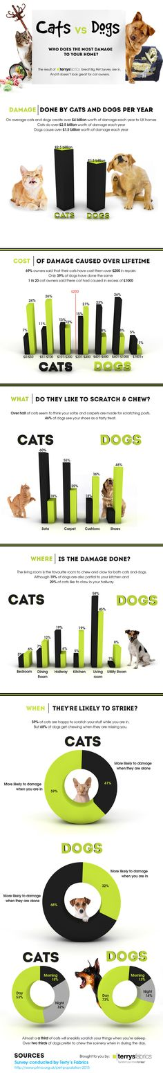 Cats or Dogs Who Does the Most Damage to Your Home - Pet Infographic #cat #dog