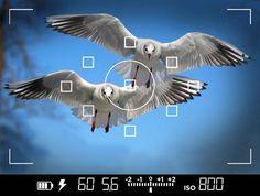 Autofokuspunkte sind eines der wichtigsten Werkzeuge um scharfe, fokussierte Bilder zu machen. Lerne jetzt alles über AF Punke - manuell oder automatisch.
