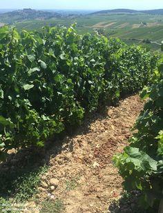 Loire Valley Wine, Vineyard, Plants, Outdoor, Outdoors, Vine Yard, Vineyard Vines, Plant, Outdoor Games