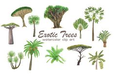 Exotic trees by ramika on @creativemarket