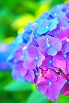 blue, violet, green