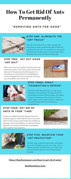 Learn How to Get Rid of Ants Permanently - 5 Step Guide To Remove Ants For Good Ants In Garden, Fruit Garden, Lawn And Garden, How To Get Rid, How To Remove, Get Rid Of Ants, Lawn Fertilizer, Lawn Maintenance, Backyard