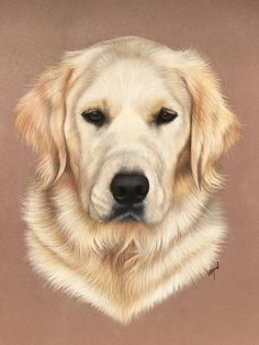 bc04f6facf6cf 1014 Best Golden retriever art images in 2019 | Dog art, Dog ...