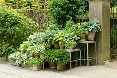 hostas in containers Ladybug Garden, Container Flowers, Shade Garden, Backyard Patio, Shades Of Green, Garden Projects, Green Leaves, Garden Inspiration, Beautiful Gardens