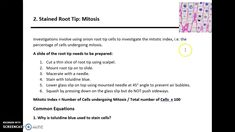 AQA A LEVEL BIOLOGY - REQUIRED PRACTICAL 2: MITOSIS A Level Biology, Mitosis, Aqa, Investigations, Teaching, Education, Tips, Study, Onderwijs