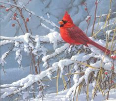 Acrylic Painting For Beginners, Beginner Painting, Bird Pictures, Pictures To Paint, Christmas Bird, Cardinal Birds, Backyard Birds, Color Pencil Art, Vintage Birds