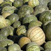 Kalahari melon seed oil is pressed from the melons which naturally grown in the Kalahari Dessert, Northern Cape, South Africa. Benefits include moisturizing, regenerating and restructuring properties, contributing to the integrity of the cell wall,suppleness and beauty of the skin. It plays a role in regulation of hydration and restructuring of the epidermis.