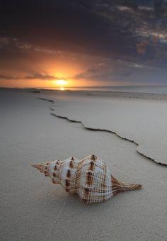 The Shell ~ Hervey B nature love