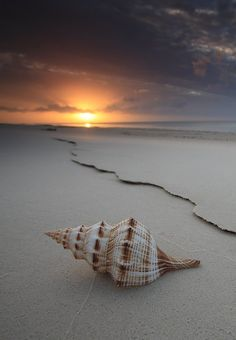 The Shell ~ Hervey B nature love