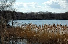 Niles Pond in Gloucester, Ma is one of the lovliest most serene walks anywhere. You'll invariably see seals on the beach side and the on the pond itself it is a busy place. Usually no one around and just delightful.